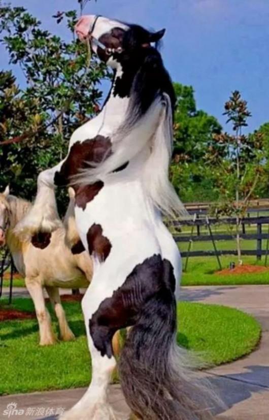 &nbsp世界上究竟有什么动物可以两条腿行走或站立?